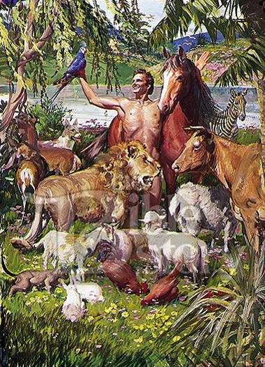 protection of animals and plants essay Conservationists argue that humans have an ethical obligation to protect other species, that diversity and natural beauty are highly prized by mankind, and that biodiversity plants and animals are also an essential source of new foods and medicines – up to 20,000 plants are used in medicines worldwide.
